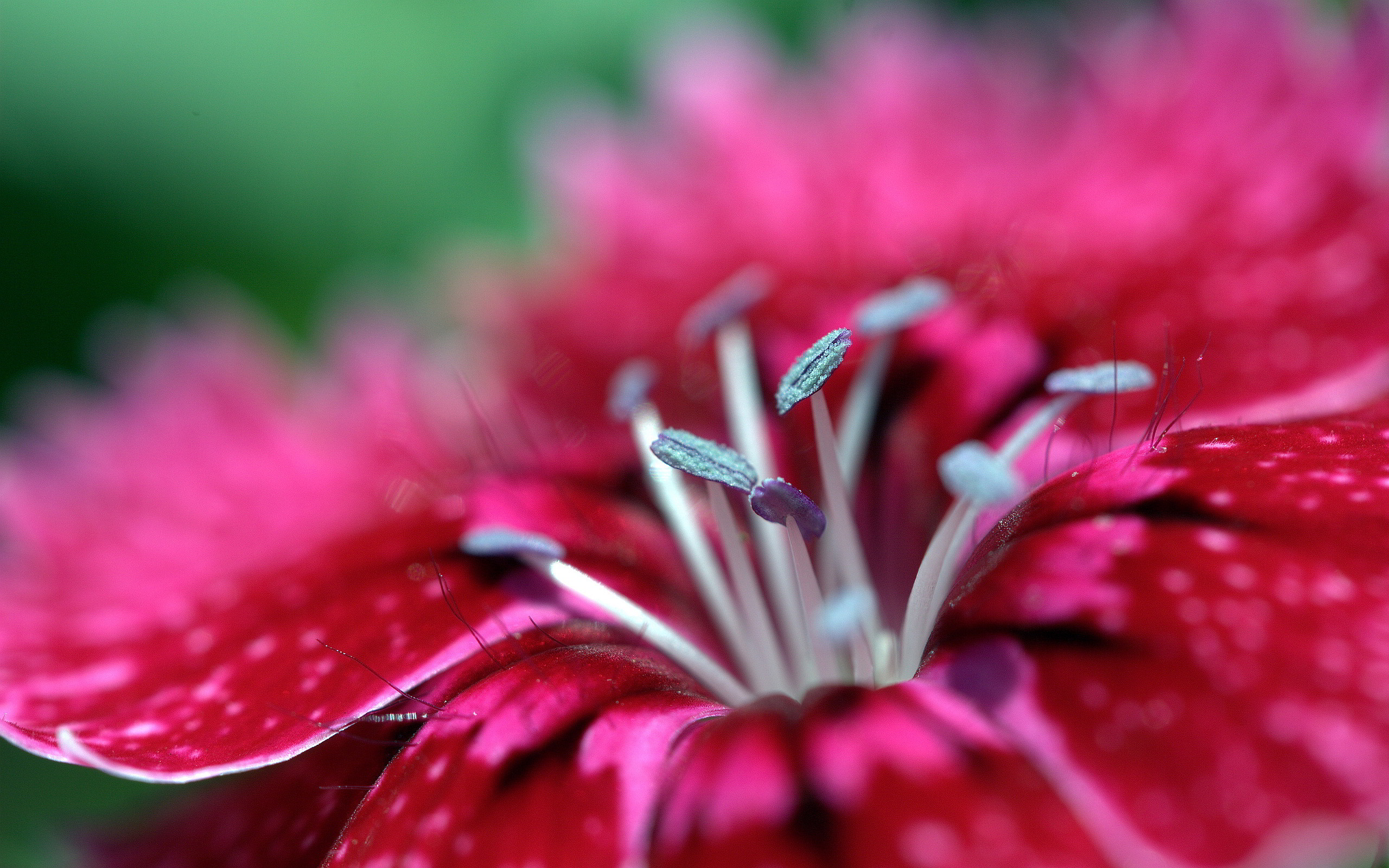 Macro wallpaper red hd hd desktop wallpapers 4k hd - Red flower desktop wallpaper ...