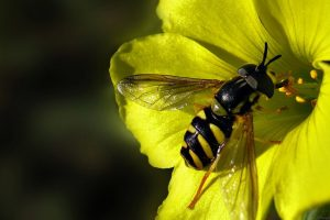 maya the bee images