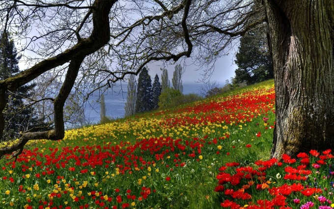 meadow wallpaper colorful flowers