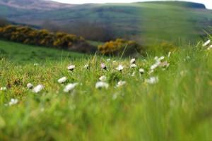 meadow wallpaper cool