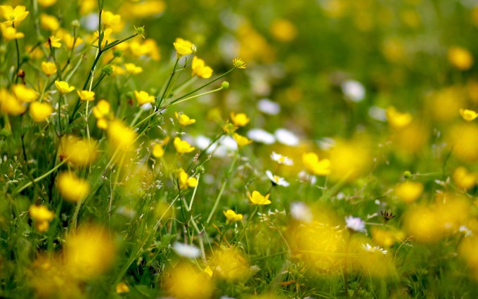 meadow wallpaper desktop