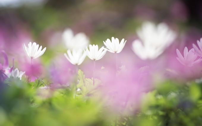 meadow wallpaper flowers
