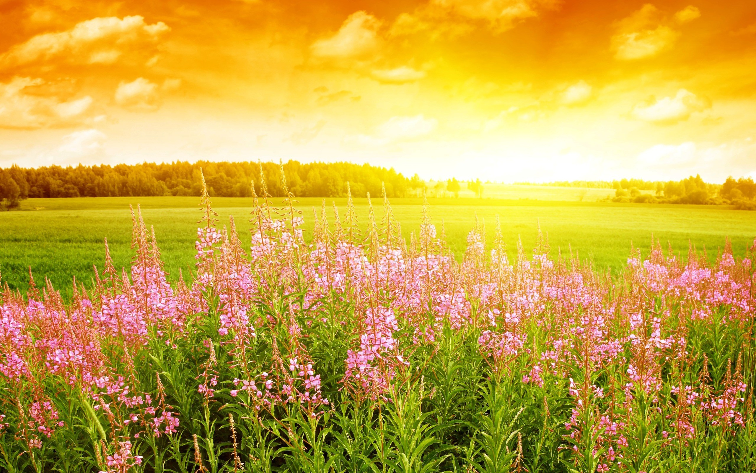 meadow wallpaper lavender