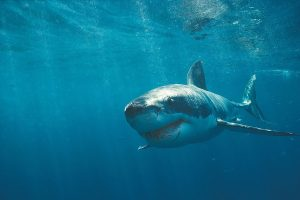 megalodon shark photos