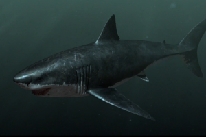 megalodon shark pictures