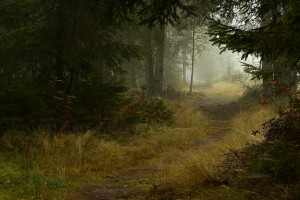 mist wallpaper dense forest