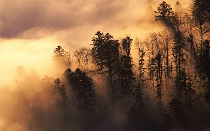 mist wallpaper hills