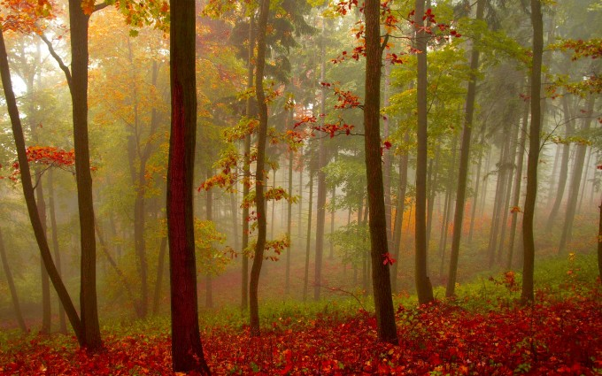 mist wallpaper nature red