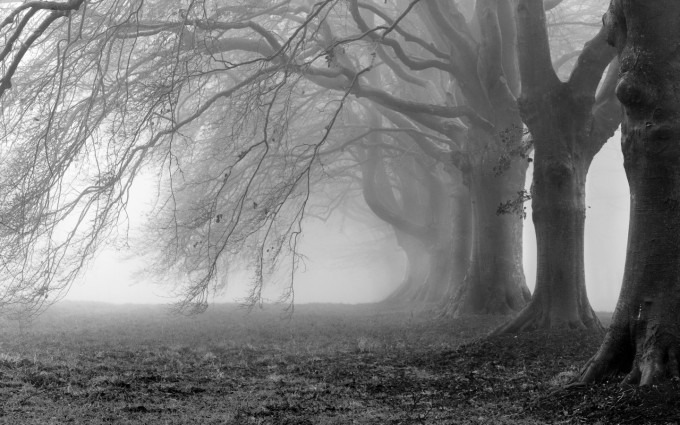 mist wallpaper tree download