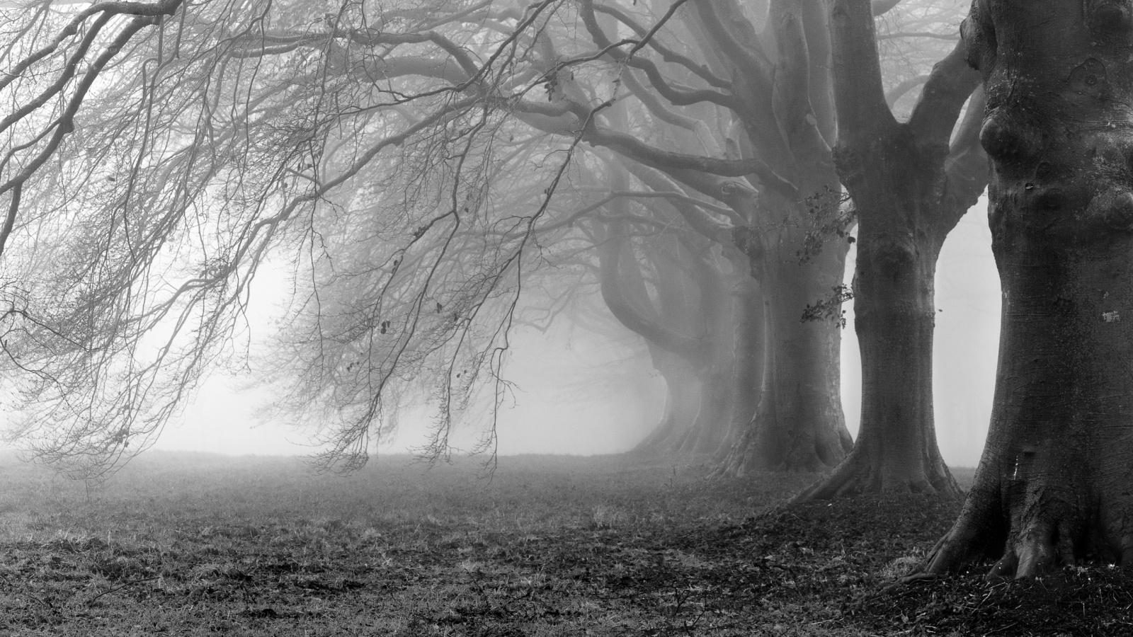 mist wallpaper tree download