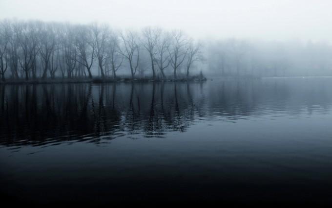 mist wallpaper trees
