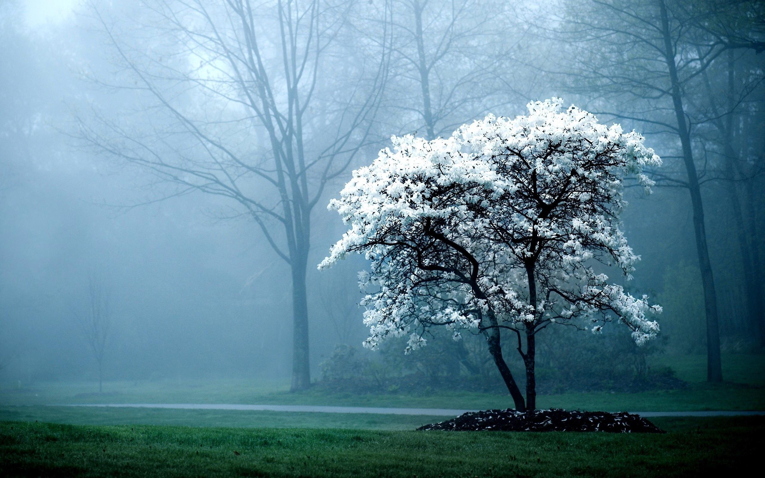 mist wallpaper winter