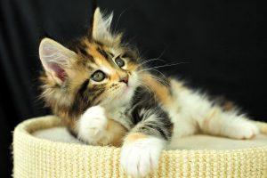 mobile wallpaper cat