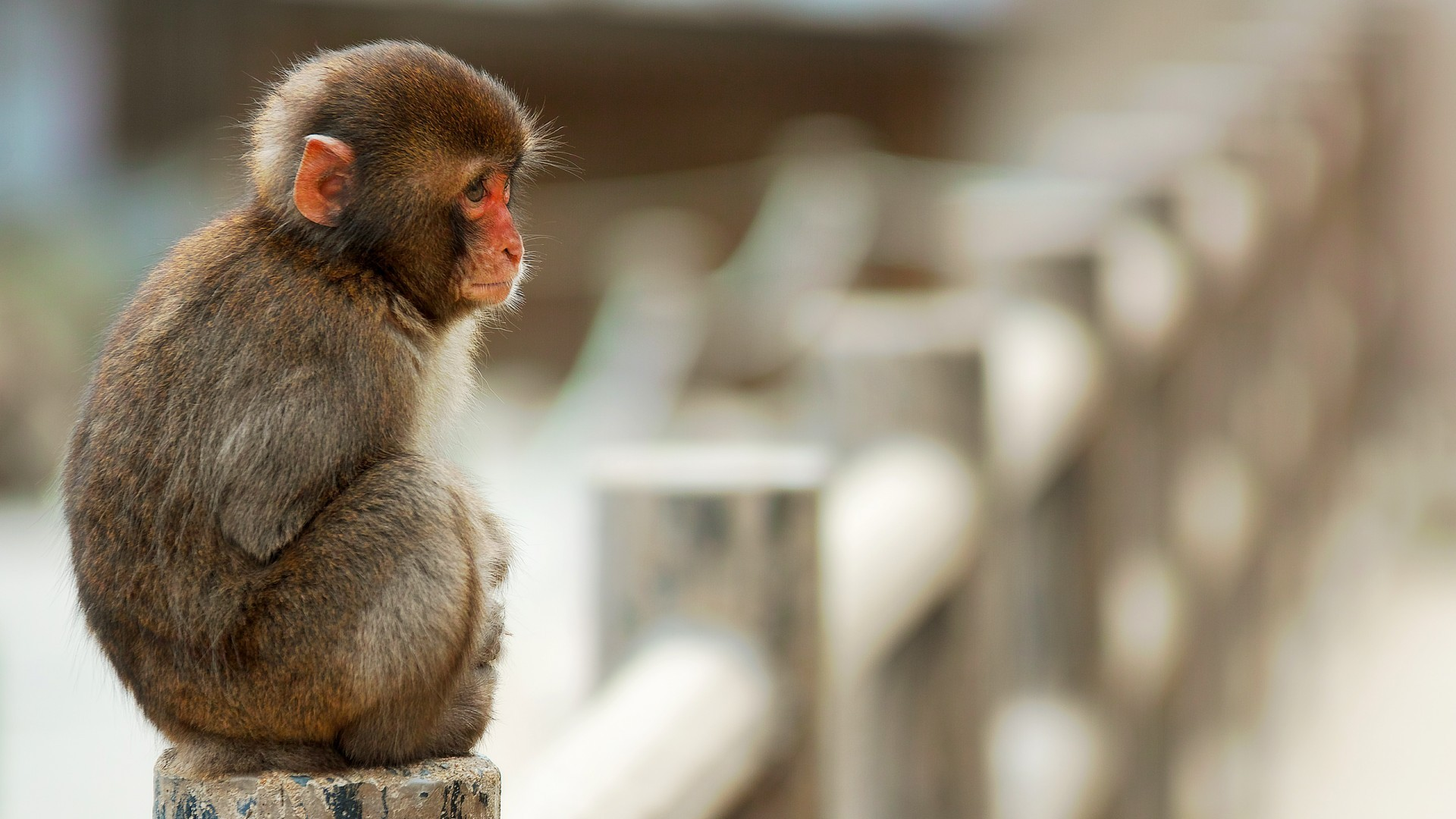 monkey curious