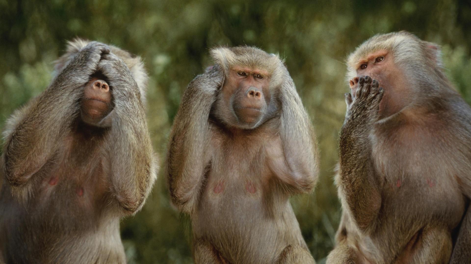 monkey funny