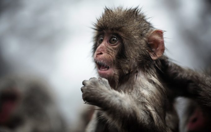 monkey picture