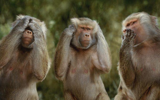 monkey wallpaper download