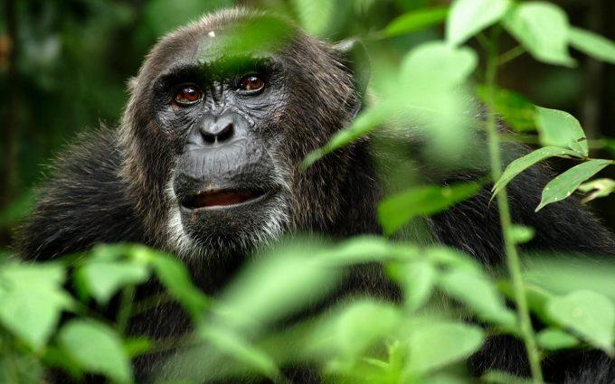 monkey wallpapers 1080p