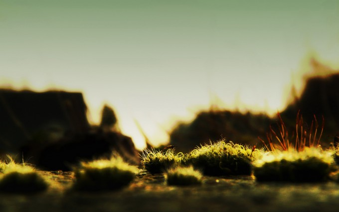 moss backgrounds