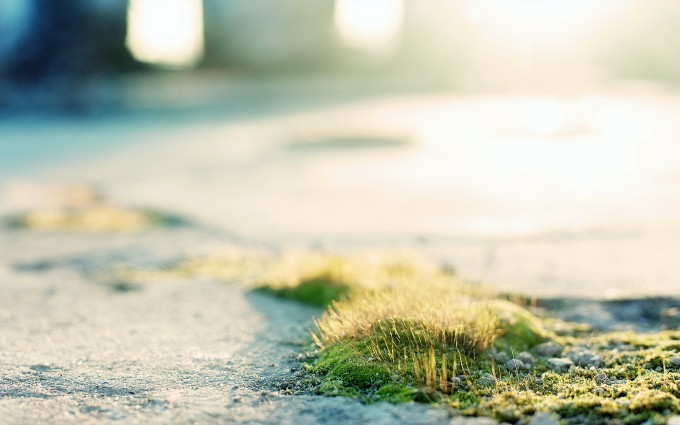 moss images