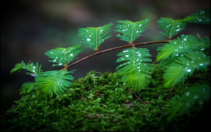 moss wallpaper A3