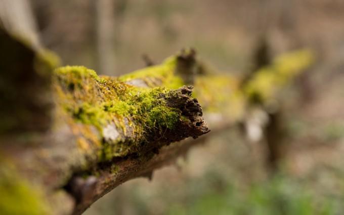 moss wallpaper A4