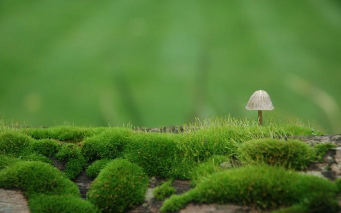 moss wallpaper A5