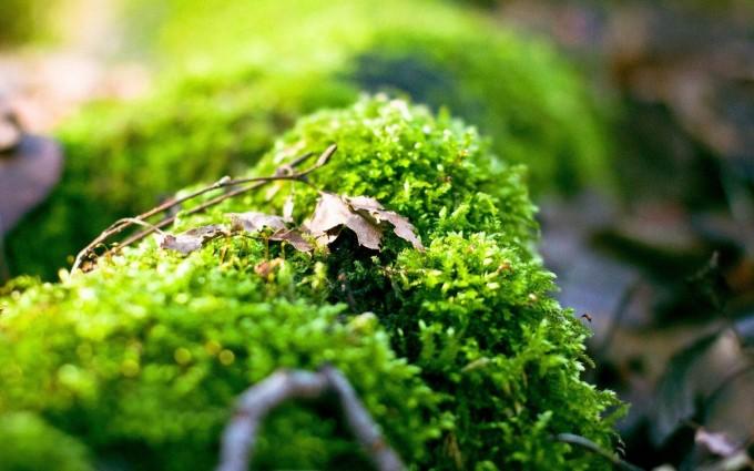 moss wallpaper A6