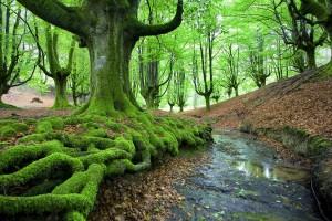 moss wallpapers A1