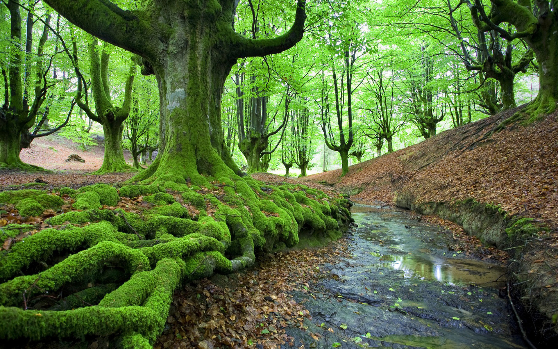 moss wallpapers A1