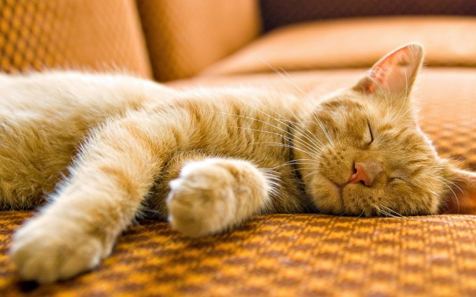 most beautiful cats wallpapers