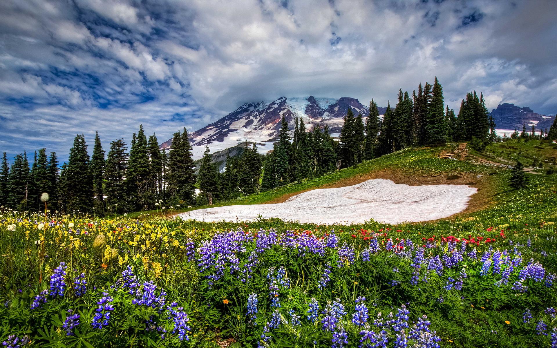 mountain wallpaper flowers