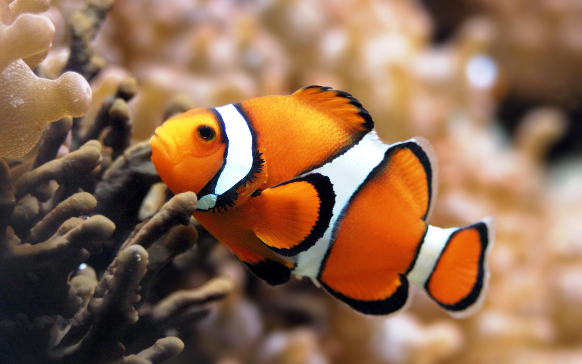 moving fish wallpaper
