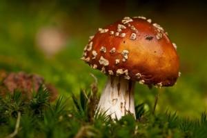 mushroom grass wallpaper