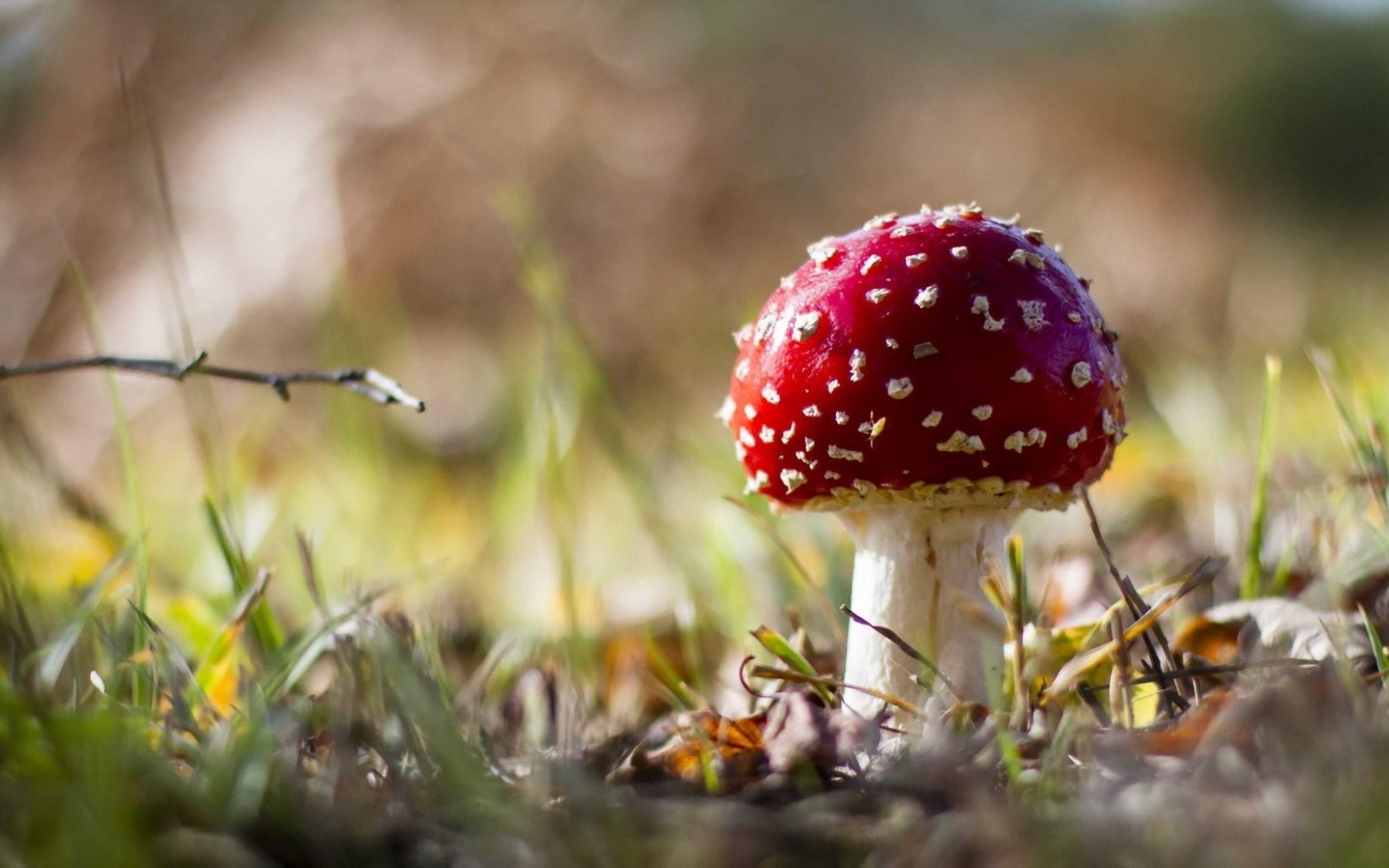 mushroom wallpaper autumn
