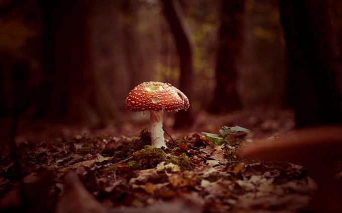 mushroom wallpaper computer