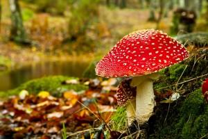 mushroom wallpaper cute
