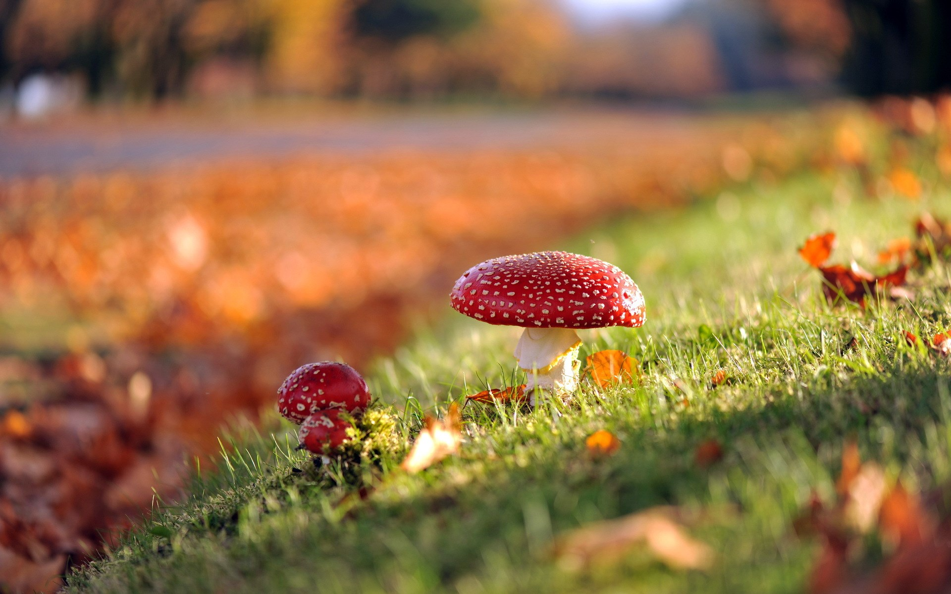 mushroom wallpaper cute red