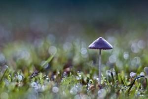 mushroom wallpaper desktop