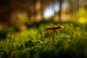 mushroom wallpaper download