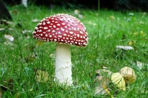 mushroom wallpaper forest