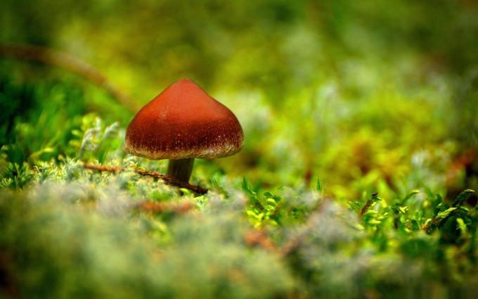 mushroom wallpaper free