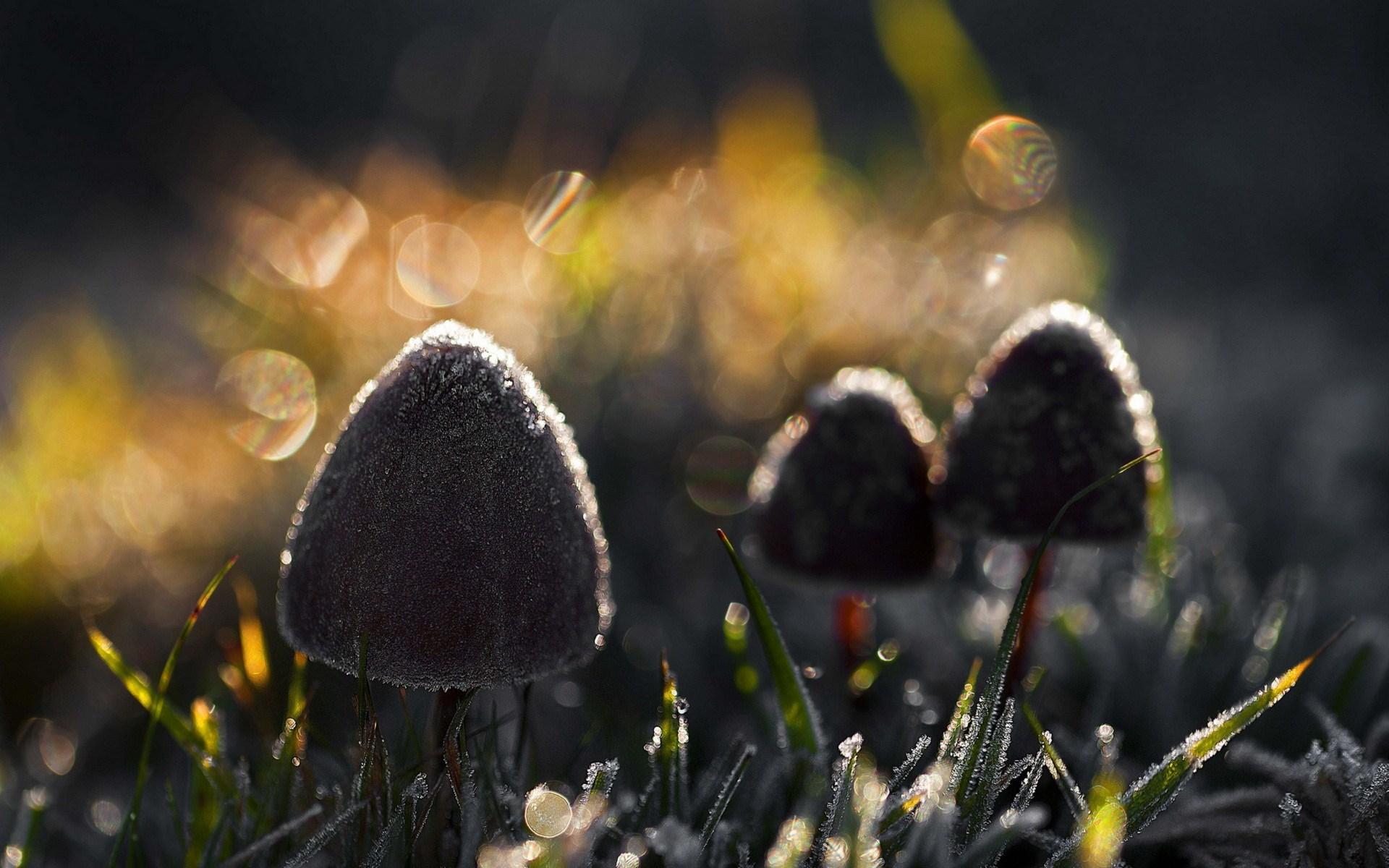 mushroom wallpaper light