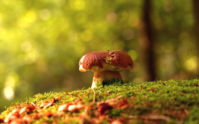 mushroom wallpaper nature