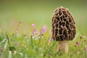 mushroom wallpaper nice