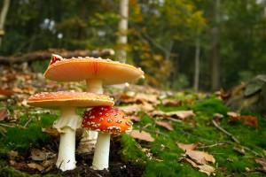 mushroom wallpaper orange