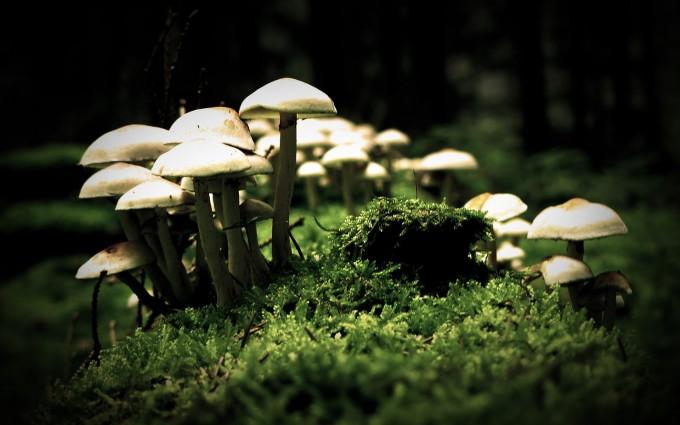 mushroom wallpaper white