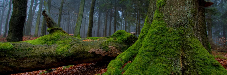 hd forest wallpaper timeline full free download