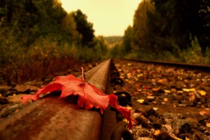nature autumn railway
