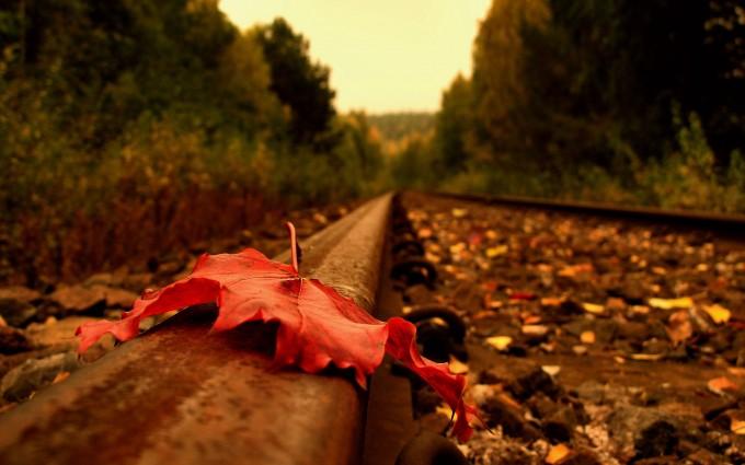 nature autumn railway